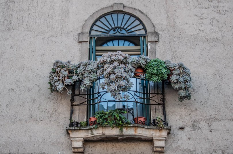 Window with succulent plants - Este, Veneto, Italy - www.rossiwrites.com