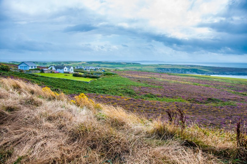 A view of Hollyhead with heather - Isle of Anglesea - Wales, UK - rossiwrites.com