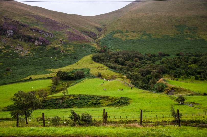 Welsh fields with horses and cows - Wales, UK - rossiwrites.com
