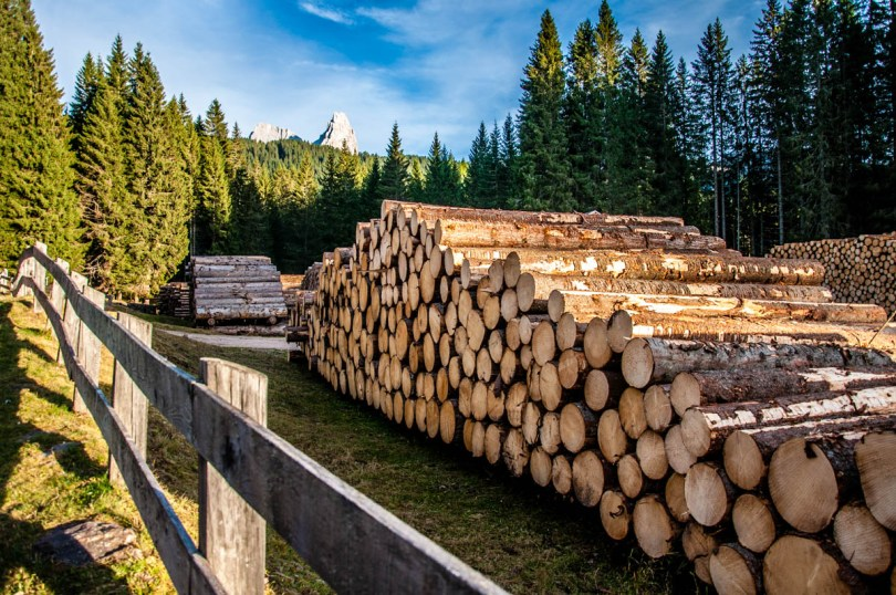 Cut logs in Paneveggio - The Violins' Forest - with the Pale di San Martino - Dolomites, Trentino, Italy - rossiwrites.com