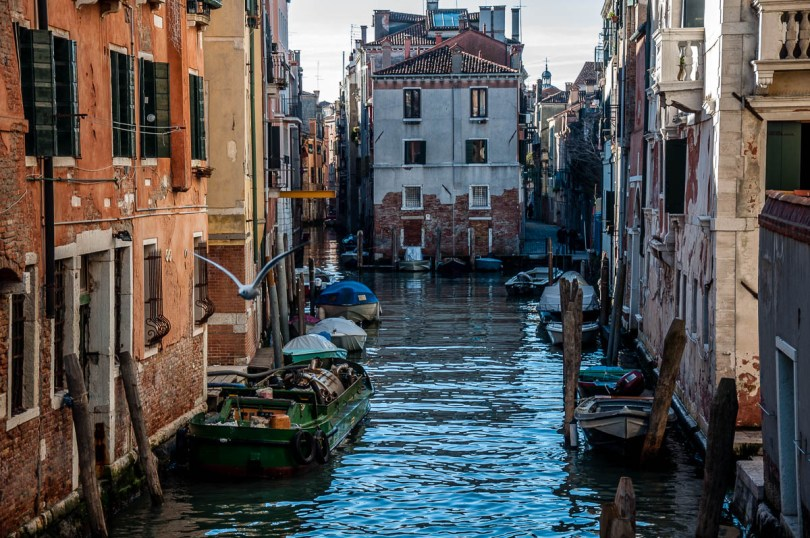 A view of Cannaregio with a seagull - Venice, Veneto, Italy - rossiwrites.com