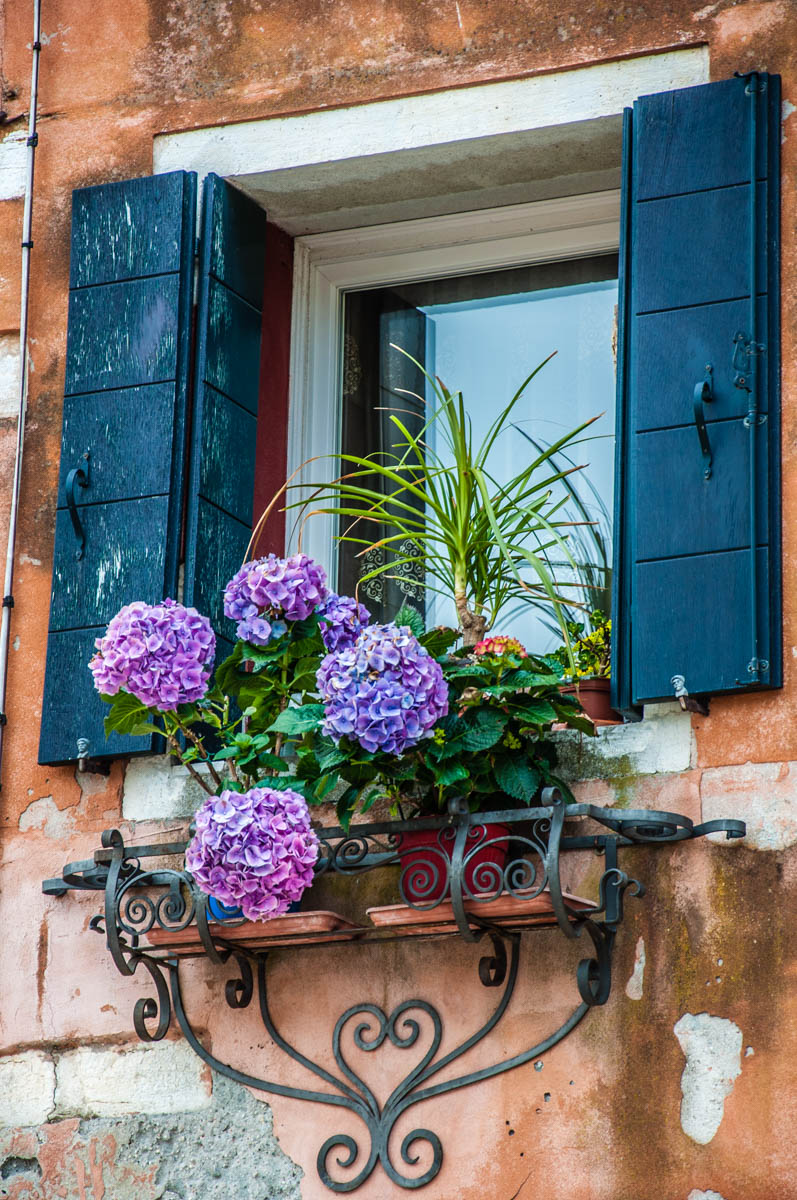 Blooming hydrangeas on a windwosill in the Jewish Ghetto - Cannaregio, Venice, Veneto, Italy - rossiwrites.com