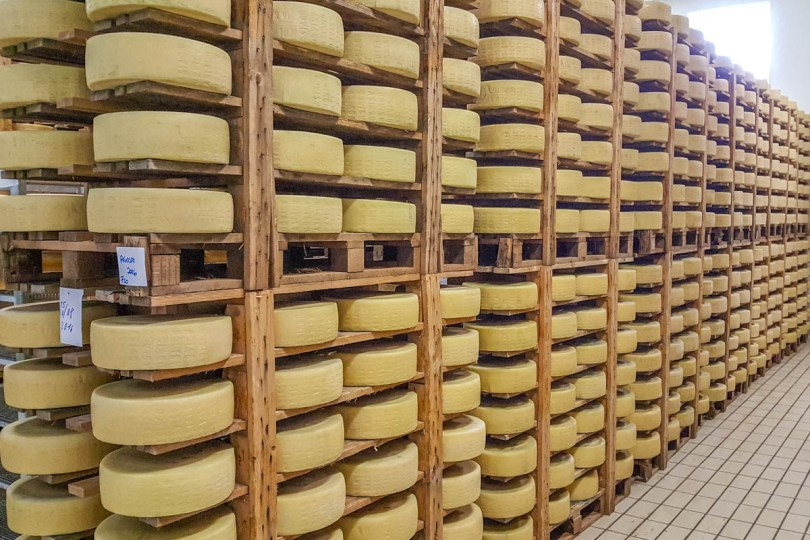 Asiago cheese wheels maturing in the cheese factory - Bressanvido. Veneto, Italy - rossiwrites.com