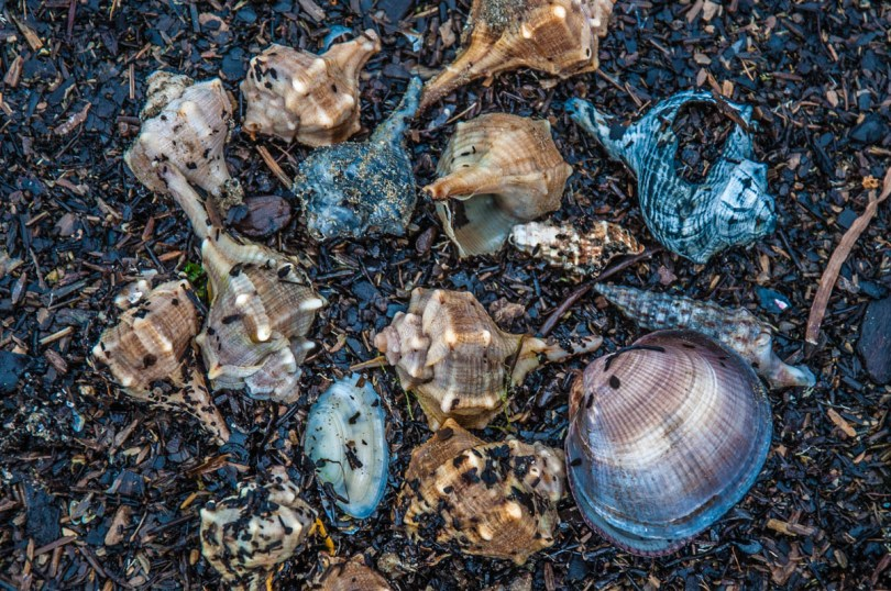 Colourful shells on the beach - Caorle, Veneto, Italy - rossiwrites.com