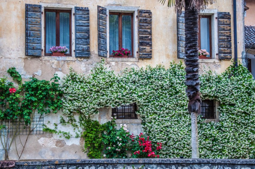 Facade covered with blooming jasmin and roses - Polcenigo, Friuli Venezia Giulia, Italy - rossiwrites.com