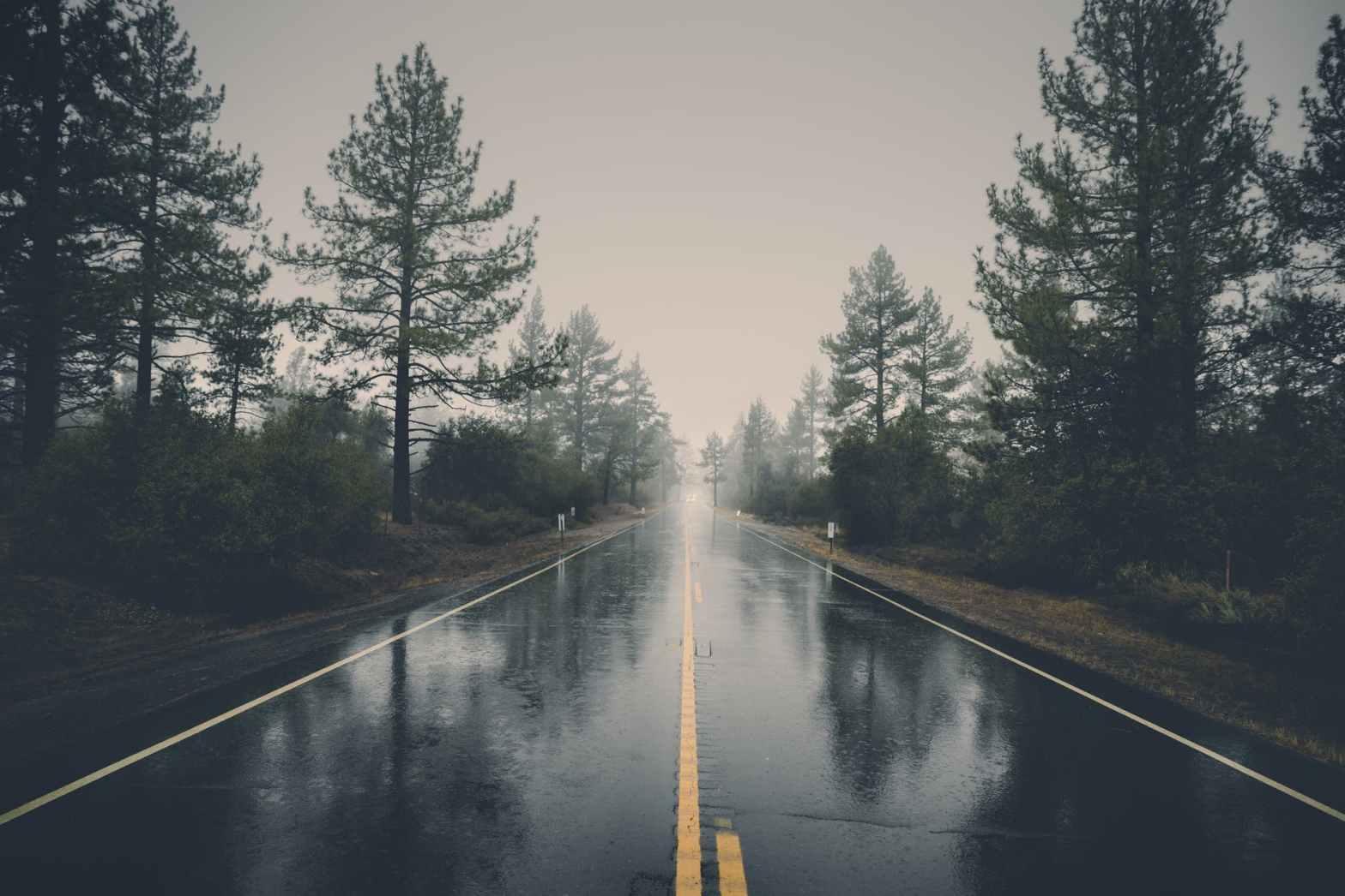 road between pine trees