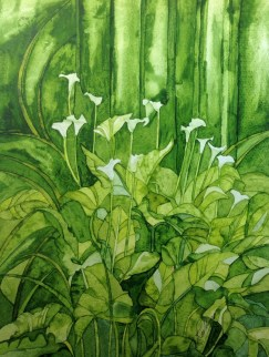 Wellington Lillies. Inks on Bockingford CP NOT paper. 28 x 38 cm. SOLD