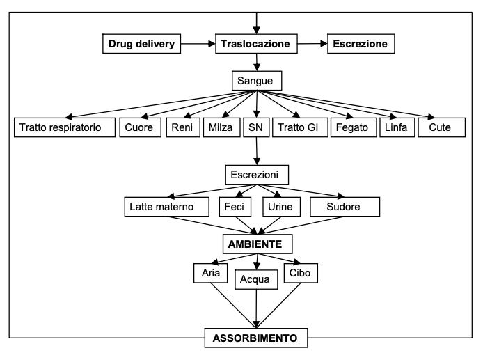 nanotossicologia Biocinetica delle nanoparticelle (Friedrichs and Schulte 2007).