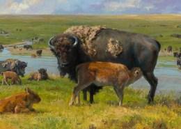 Artwork Photography of Buffalo by Mary Pettis