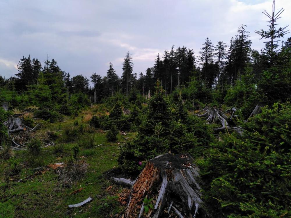 K1024_Waldschäden2