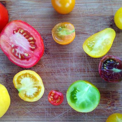 Farm Focus: Tomatoes
