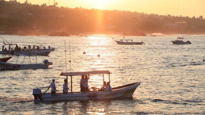 Preocupante, que el Presupuesto Federal 2020 para la pesca y acuacultura tenga una disminución del 41%