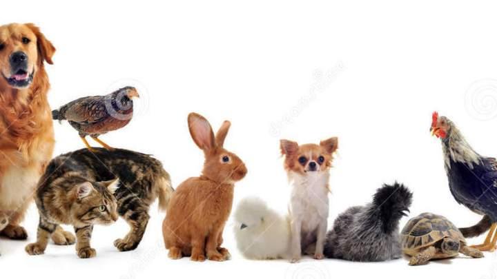 """Convoca Congreso de Oaxaca a """"Foro de Bienestar Animal"""""""