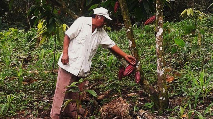 Oaxacacao, empresa mazateca invitada al festival «Del Cacao al Chocolate»