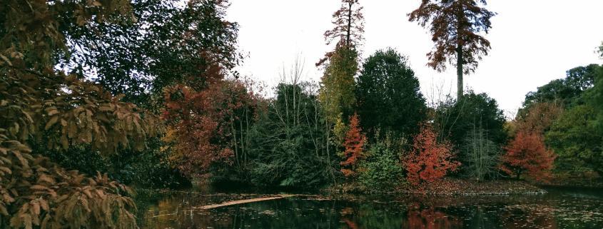 fall london park uk lake tree forest fall autumn leadership learning work rotana ty
