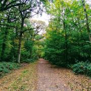 wood forest path walk tree autumn quest leadership exploration learning community network rotana ty