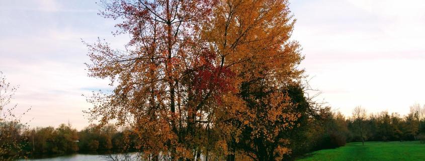 autumn tree lake green landscape complexity caring health leadership skills work learning rotana ty