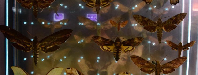 transform next gen entreprise summit butterfly transform leadership change business design work art culture creativity learning conference next gen entreprise review rotana ty