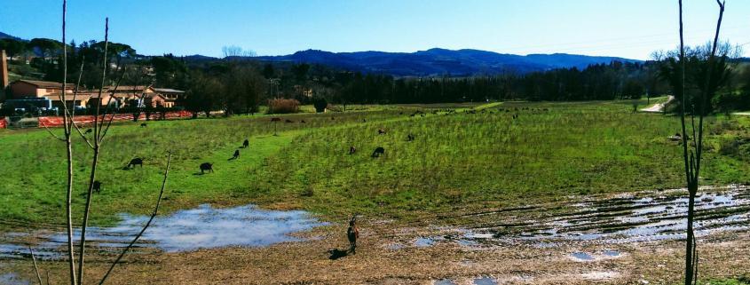 deer countryside landscape toscana community media visual thinking analysis rotana ty