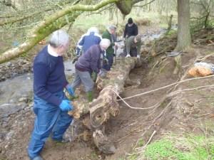 Tree Trunk Tethering