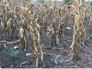 drought-in-uganda-1