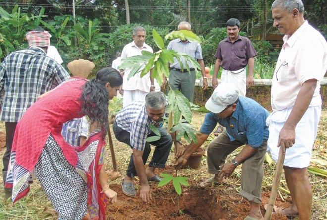 PDG V G Nayanar, D 3202, planting a sapling in an arboretum.