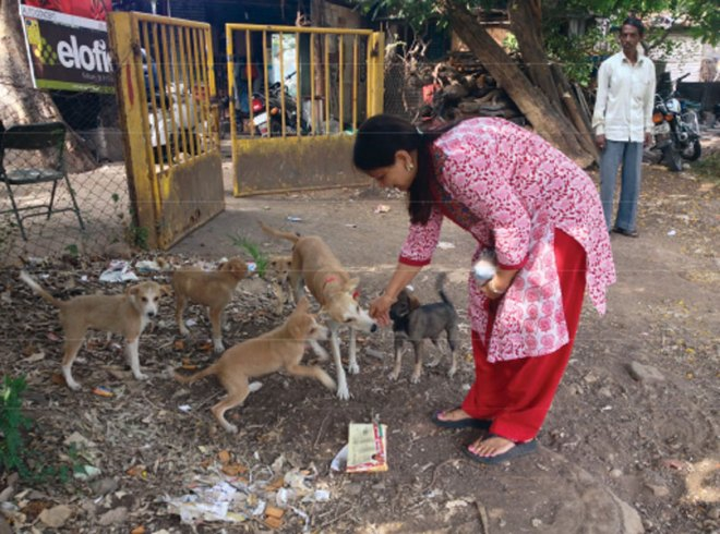 RC Pune Kothrud RI District 3131 <br/> Under the Anti-rabies drive dog adoption camps were conducted and vaccination of 30 stray dogs was done.
