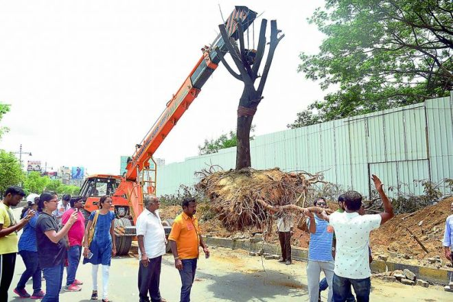 Trees being translocated to Manikonda from Malaysian Township by a volunteer organisation at KPHB colony for widening the road to construct a flyover. Photo: DC