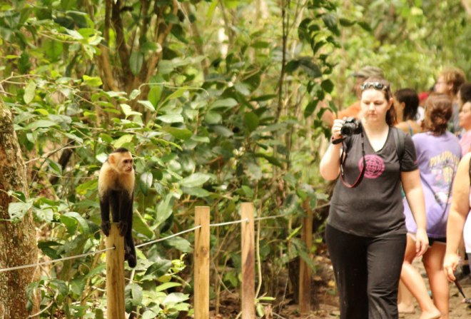 Monkeys galore at the Manuel Antonio National Park.