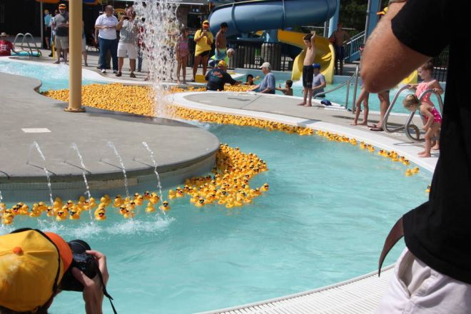 More than 3,000 plastic ducks will be part of the Rotary Club of South Gwinnett's annual Duck Derby to be held on September 9.