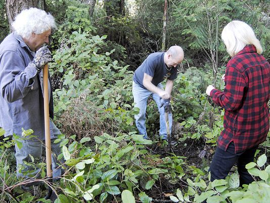 From left, Denny Wilford, Gig Harbor Mayor Kit Kuhn and Gig Harbor Midday Rotary Club President Marilyn Hoppen clear away areas of salal groundcover before planting aspen trees. Photo: Christina Hallock