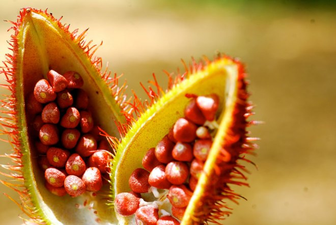 Annatto is an orange-red condiment and food colouring derived from the seeds of the achiote tree.