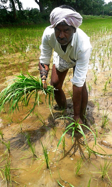 A beneficiary fitted with an artificial hand planting saplings in his field.