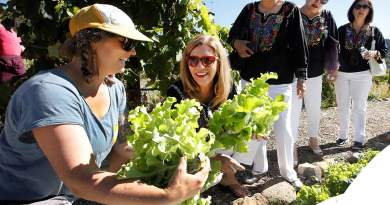 Brooke Frazer (left), Manna garden and food security programmes manager, cuts a head of lettuce with Anna Mier, a member of the Juarez Campestre Rotary Club, during a tour of Manna. The group from Juarez, Mexico, is visiting its sister club, the Durango Daybreak Rotary Club. Photo: Jerry McBride/Durango Herald