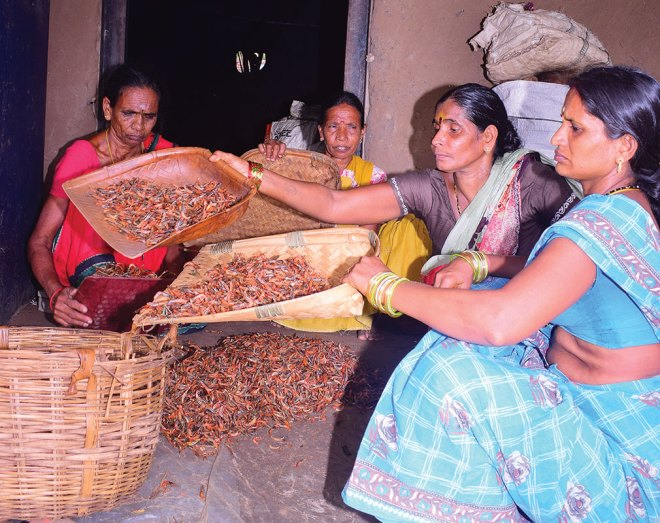 Village women engaged in processing the shrimps.