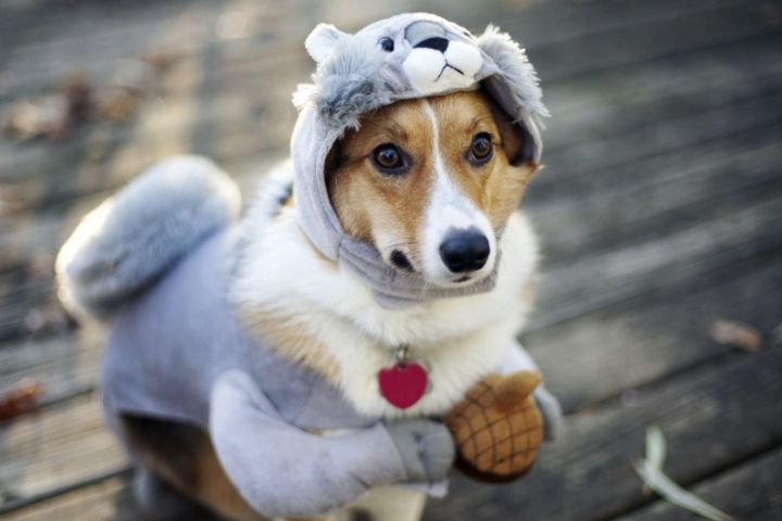 loclats web dogs chien déguisé