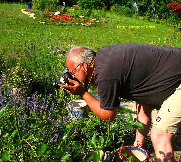 Auf Bienenjagd im Provence-Beet