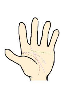 運命線(人差し指と中指の間に向かう)
