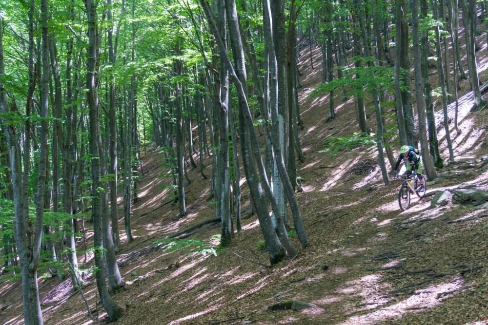 Hans im dichten Wald auf dem Laubtrail