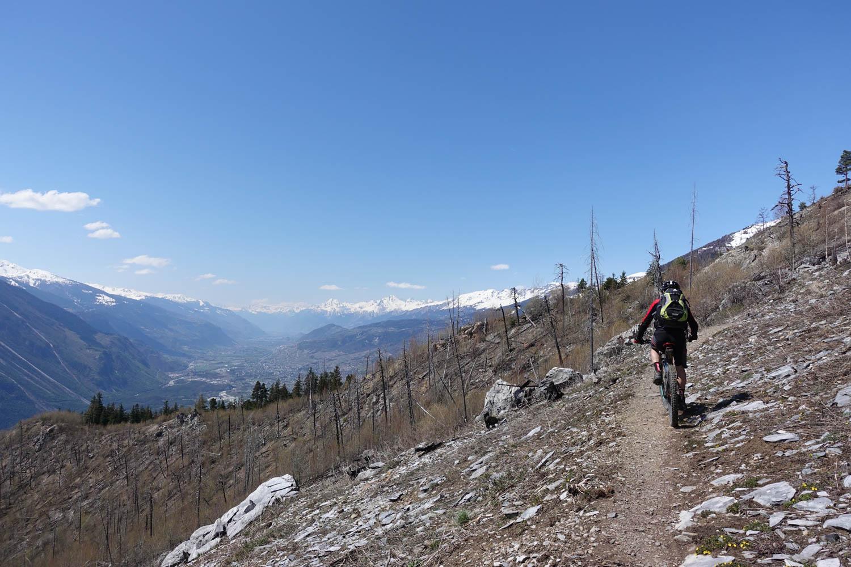 Osterhasen auf dem Trail