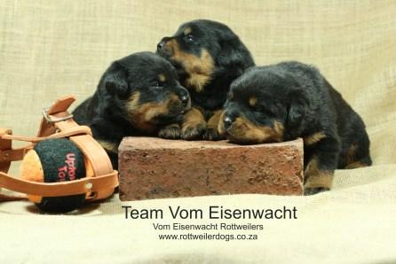 Team Vom Eisenwacht