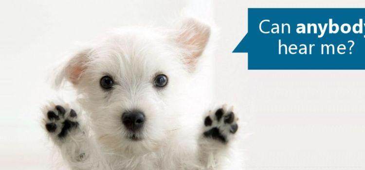 Deadly Canine Parvovirus -