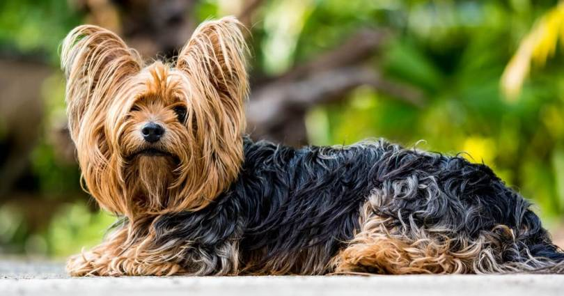 Most cutest dog breeds