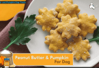 pumpkin peanut butter dog treats recipe