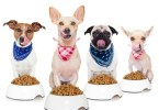 best diet for your dog