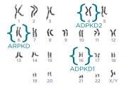 PKD chromosomes from PKD Foundation
