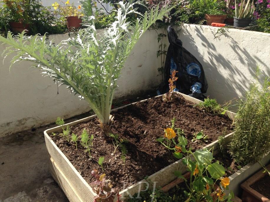 Tidied up veg plot