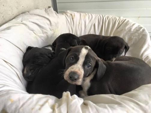 Hayley's pups
