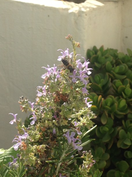 Rosemary Bee