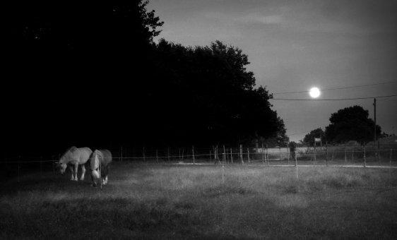 nuit, lune, chevaux